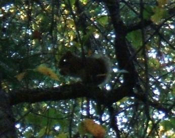 20120927 Squirrel Eye