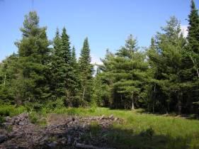 phs1 Balsamea logging header clearing facing southeast 20050621