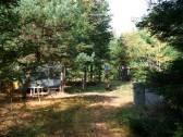 phs1 Squatter Slopey Scotch Pine 20060928