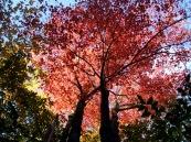 phss3-04 20120927 Fall Colors 4