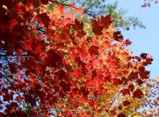 phss3-06 20120928 fall color 01