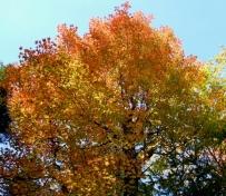 phss3-13 20120928 fall color 08
