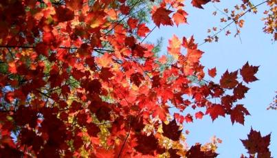 phss3-15 20120928 fall color 10