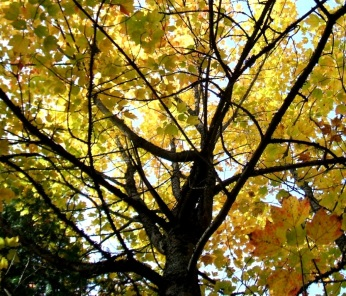 phss3-16 20120928 fall color 11
