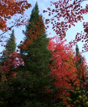 phss3-17 20120928 fall color 12
