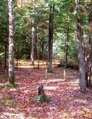 phss3-19 20120928 fall color 14