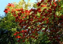phss3-20 20120928 fall color 15