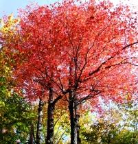 phss3-21 20120928 fall color 16