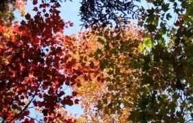 phss3-24 20120928 fall color 19