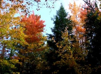 phss3-25 20120928 fall color 20