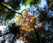 phss3-28 20120928 fall color 23