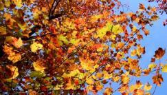phss3-31 20120928 fall color 26