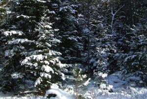 Winter20121225BalsameaWayB