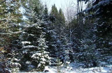 Winter20121225BalsameaWayD