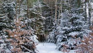 Winter20121225KieferLoopSside