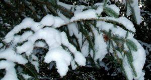 Winter20121225SnowBalsamBranch