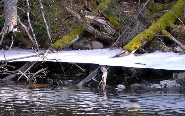 Ice 10 200504 Ice Shelf Duck