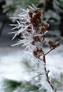 Ice 12 20091225 Frozen Fog Crystals