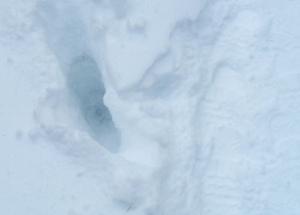20130326-Snow-Paths-02