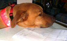 This paperwork is killing me.