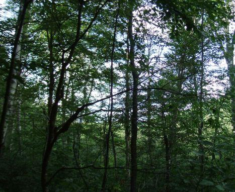 Debar 11 Pond_South_Trees