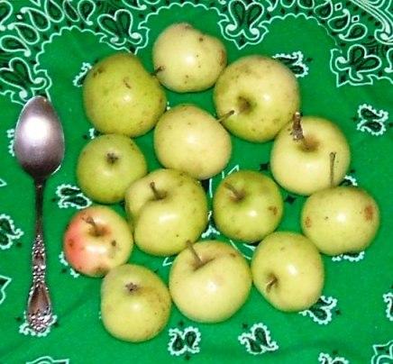 20130917 little green apples