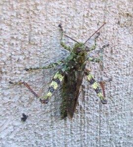 20130918 Locust 2