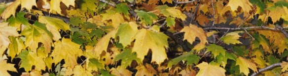 Biophilia_Autumn-Leaves