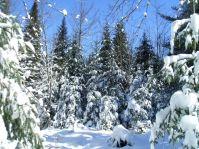 phss5-winter-201202-g.jpg