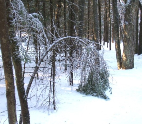 Ice-Storm-Arcs-02-Balsam-20131224
