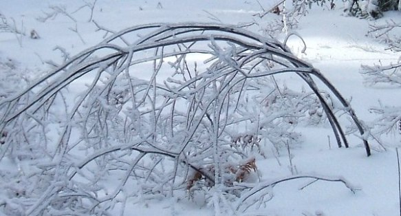Ice-Storm-Arcs-07-Maple-20131225