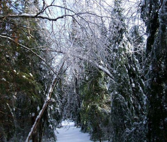 Ice-Storm-Arcs-09-Maple-Bow-Arrow-20131225