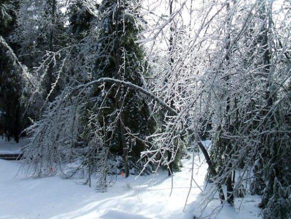 Ice-Storm-Arcs-10-Maple-20131225