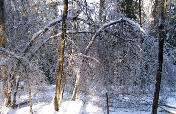Ice-Storm-Arcs-12-Beech-20131225