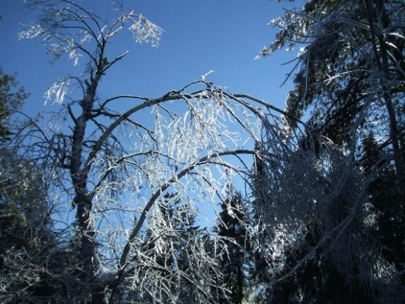 Ice-Storm-Arcs-13-Poplar-20131224