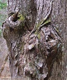 pitys tree set 2b txt