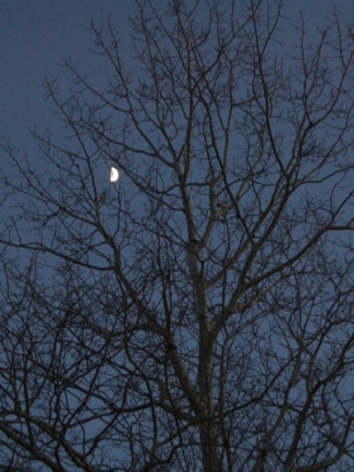 a00-CHWF-14E06-Smith-Rd-Beech-tree-half-moon-400x534px