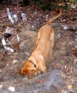 Buddy digging