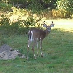 oscar-deer-20140906e-notxt