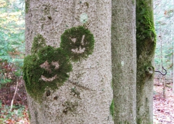 Beech 28 Moss Happy Face 575x412