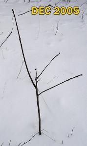 20051211 Driveway Oak 2 ft Winter txt