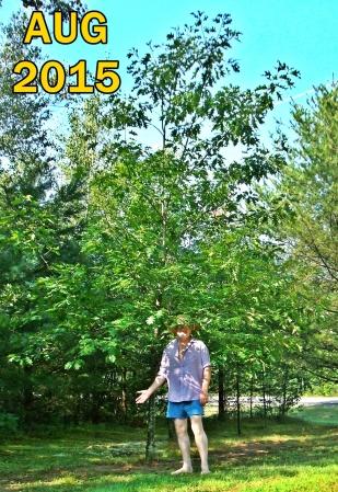 20150819 Driveway Oak 02a txt