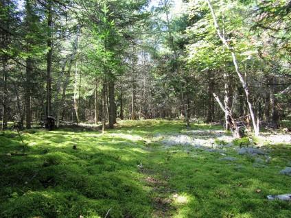 Aranyaka Maze Mossy Paths